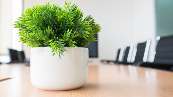 Add a Plant in Your Office